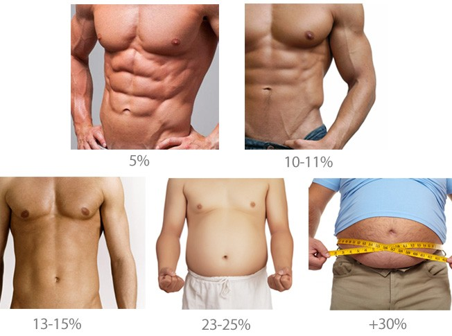 Pourcentage de graisse corporelle pour abs à montrer